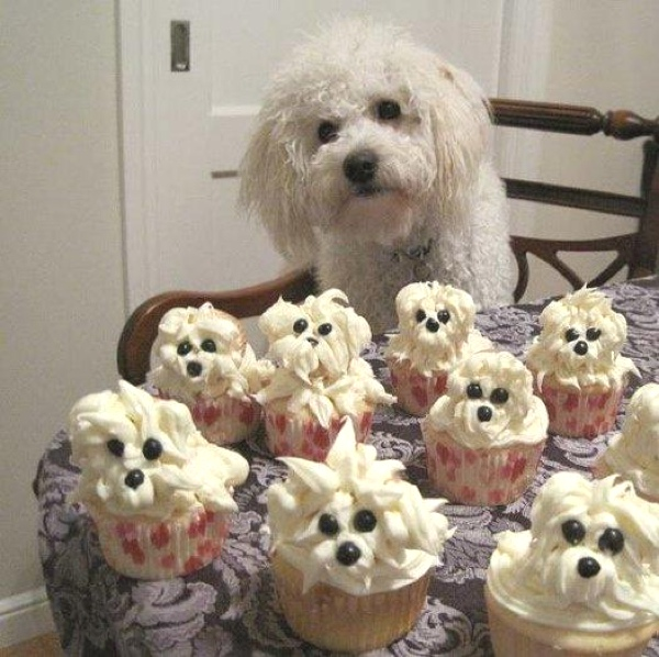 dog with dog capcakes