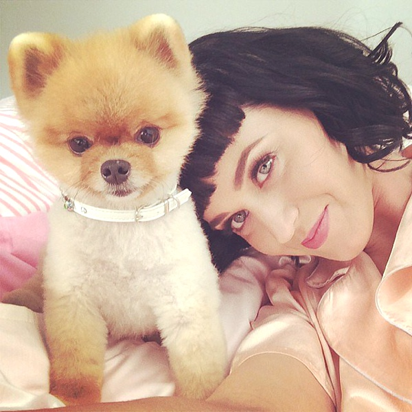 Katy Perry cozied up to Jiff the Pomeranian.