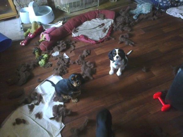 puppies mess