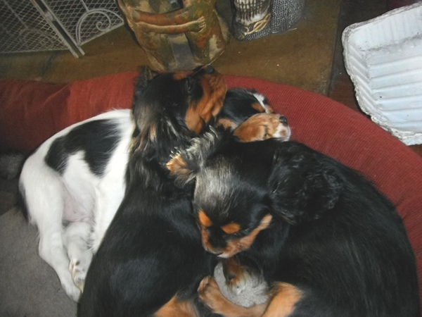 the three cavaliers sleeping