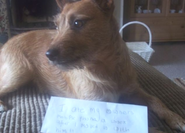 Confessions of naughty dog