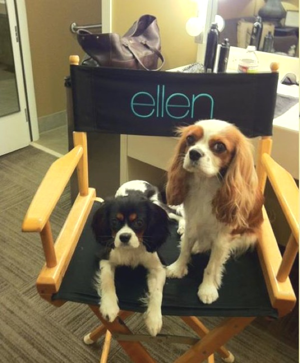 Lexi and Harley at the Ellen Show