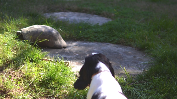 Spot (dog) cavalier king charles and turtle