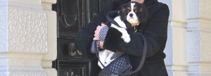 London Cavalier King Charles Spaniel Chanel bag