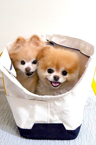 boo buddy in basket