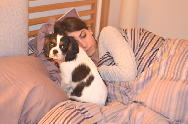 cavalier puppy spot on the bed