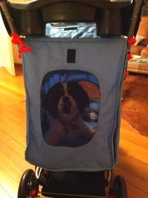 dog stroller for cavalier King Charles Spaniel