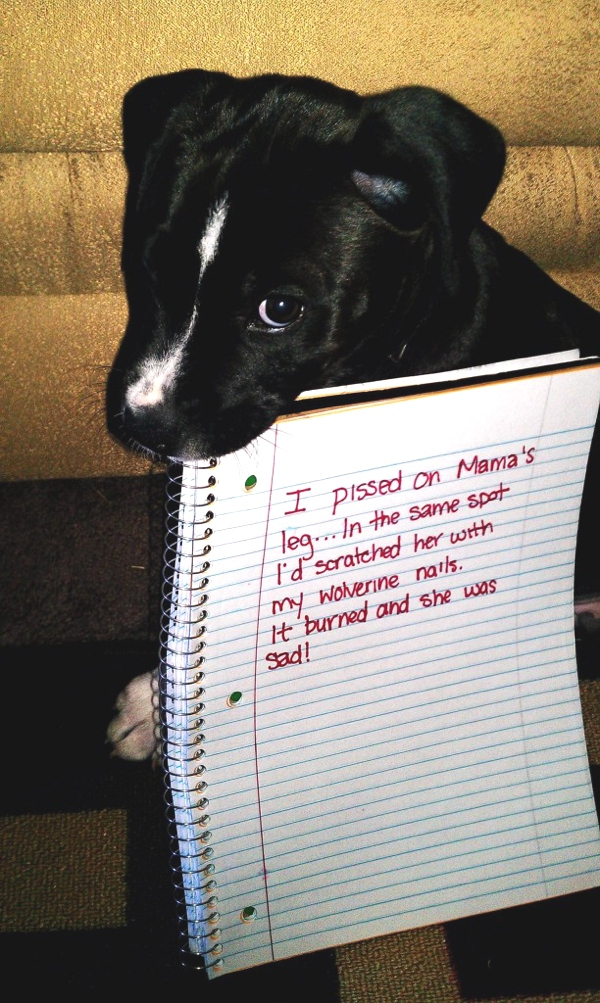 Confessions of naughty dogs
