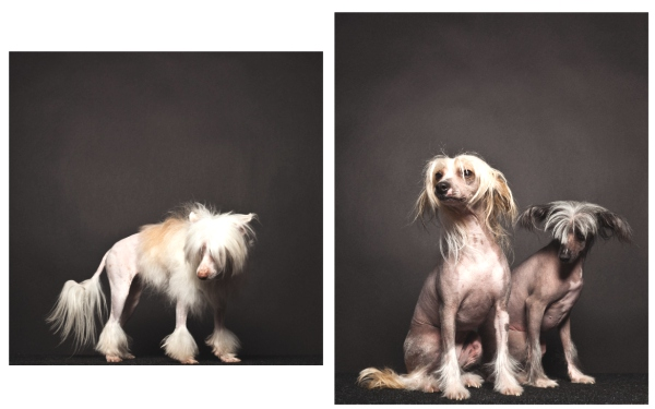 Groomed Crazy Style by Paul Nath