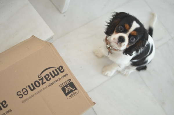 Amazon box dog puppy king charles