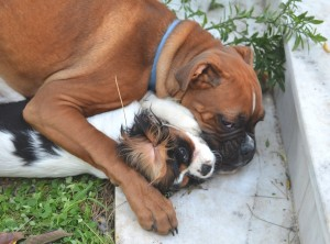 spot and maximo hugging