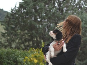 profile pic cavalier tricolor with owner