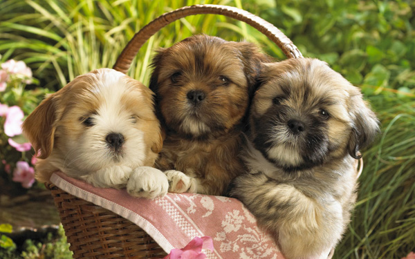 2-Cute-Puppies