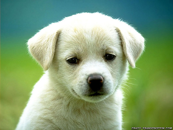 20-Cute-Puppies