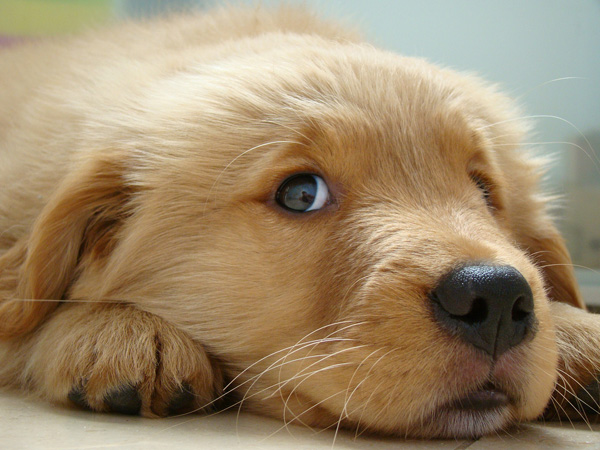6-Cute-Puppies
