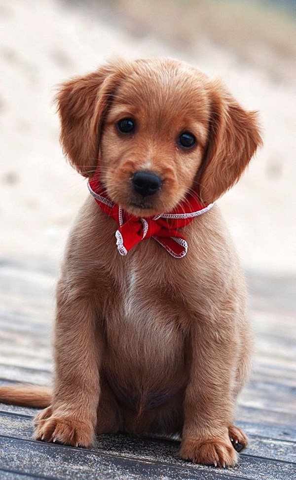 7-Cute-Puppies