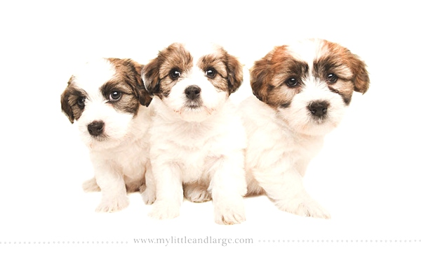 Cuttest Dogs Ever01