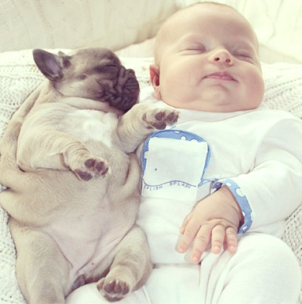 Famous baby and baby dogs01
