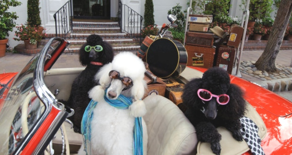 Canines on vacation