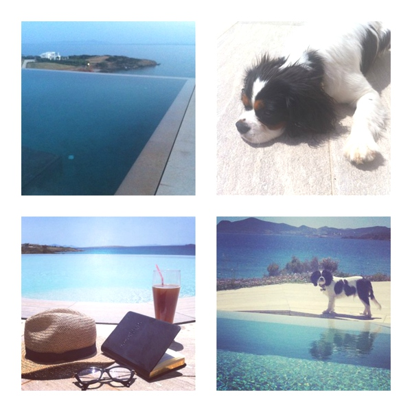 Instagram Spot Cavalier King Charles Spaniel swimming pools