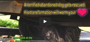 Rescue Dog transformation (video)