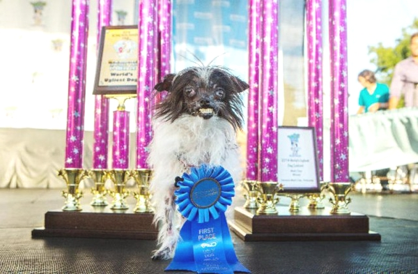 Worlds-Ugliest-Dog-2014-winner-