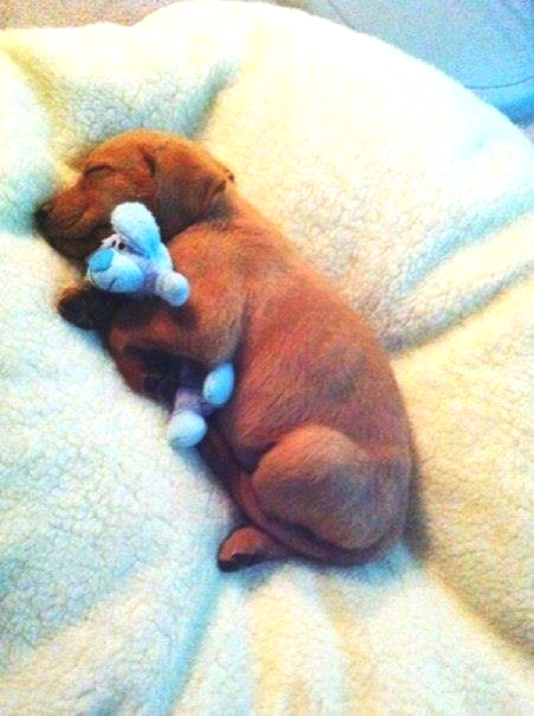 Dog sleeping toy