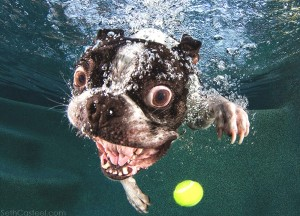 Seth Casteel Underwater puppies02 yellow ball