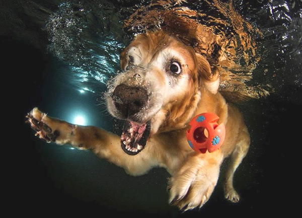 Seth Casteel Underwater puppies
