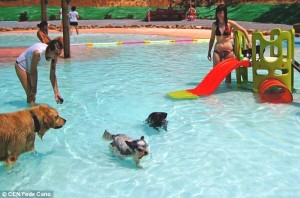 Swimming pool for Canines00