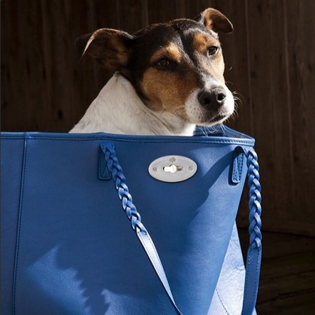 mulberry-dorset-tote-blue-bluebell-cute-dog-in-handbag-everyday-designer-handbag_1