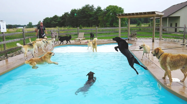 dogs swimming in pool
