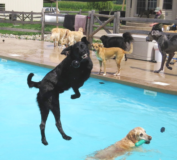 A dog Pool Party