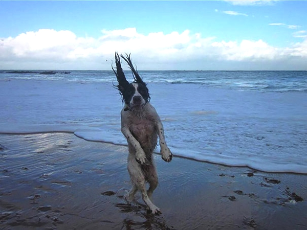 Amazing Perfectly Timed Funny Dog photos03