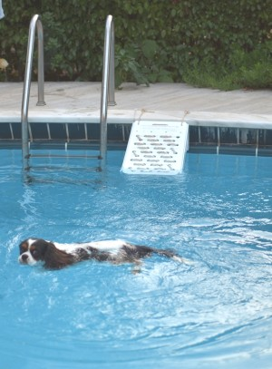 Spot cavalier swimming pool escape skamper ramp