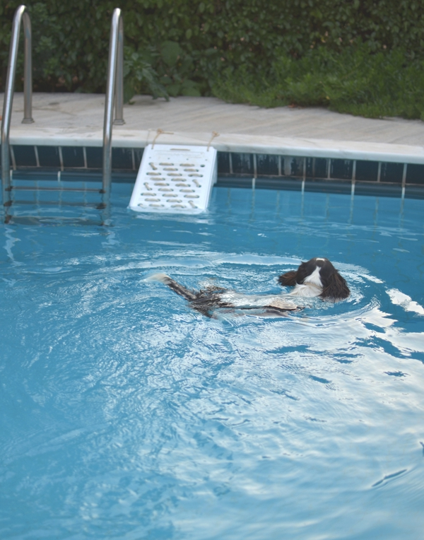 Spot cavalier swimming pool escape ramp