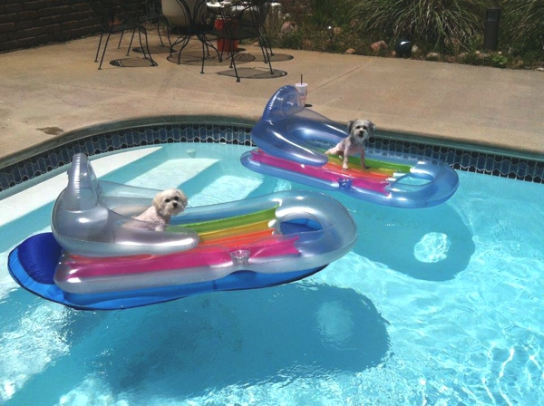 Dogs Floating Pool Chair