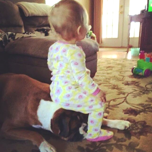 baby sitting on dog head