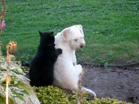Cat massaging dog The Video