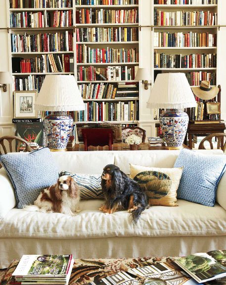 Cavaliers Couch living like a king charles