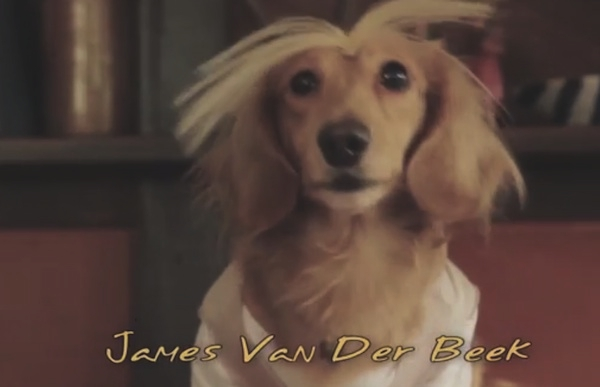 Dachshund's Creek | James Van Der Beek The new Dog Dawson's Creek