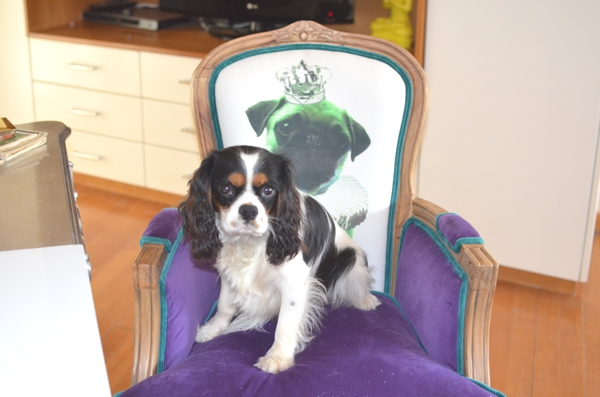 Kare Dog Chair pug and king charles00