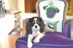 Kare Dog Chair pug and king charles