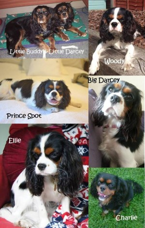 First dog birthday cavalier king charles