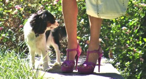 YSL sandals and dog