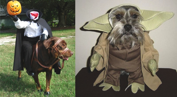 Best Funny Halloween Dog Costumes01