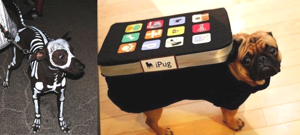 Best Funny Halloween Dog Costumes02