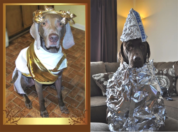 Best Funny Halloween Dog Costumes03