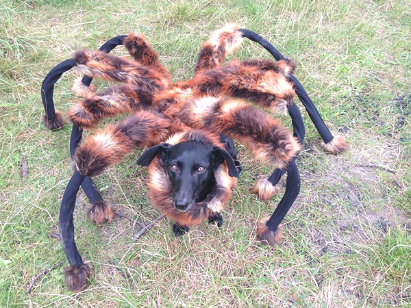 Best Funny Halloween Dog Costumes04
