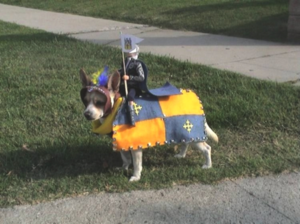 Best Funny Halloween Dog Costumes05